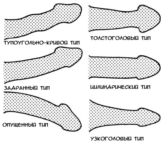 a pénisz alapja vékony)