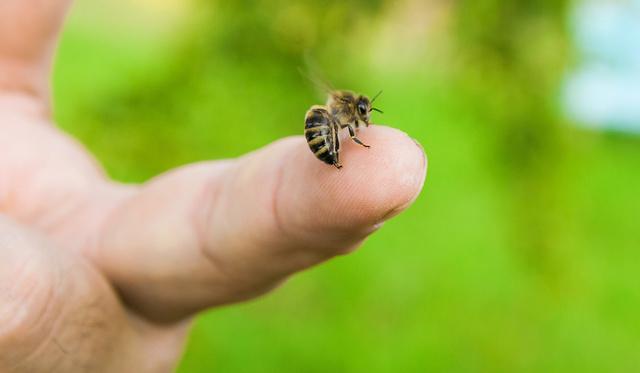 keni a péniszet mézzel