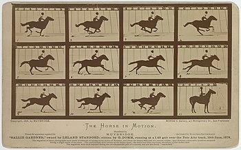 erekció lovak fotóin