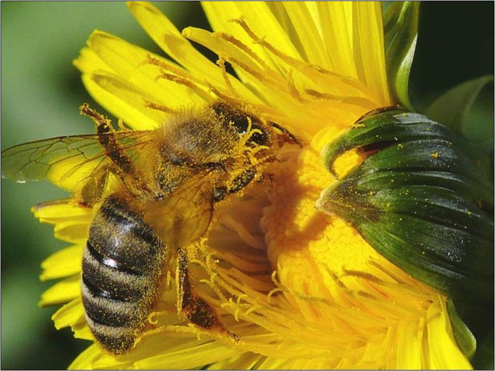 méhpempő felállítása