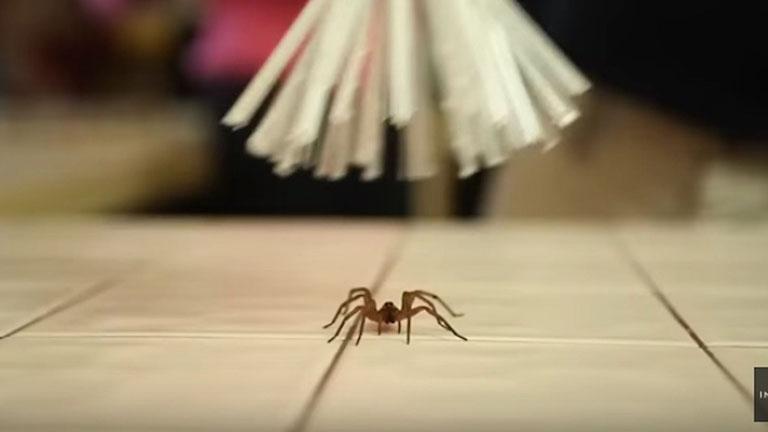 Hosszabbítsa péniszt hangyák