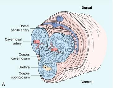 Injekciós ultrahang vizsgálat