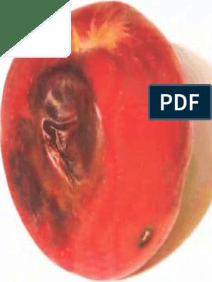 fájdalmas fej az erekció során