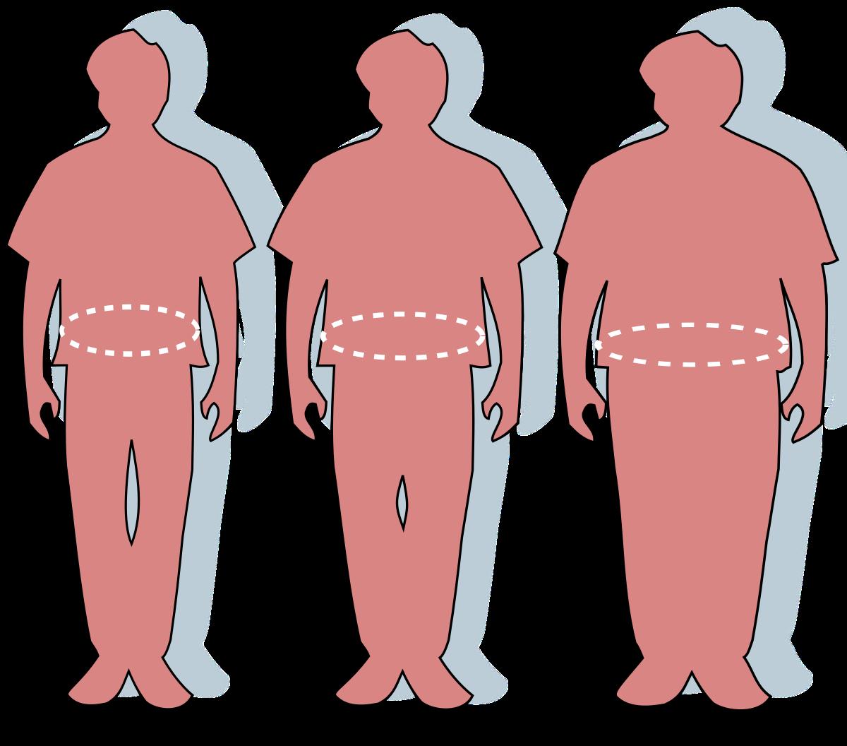 A súly befolyásolja a pénisz méretét?