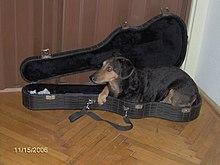 Kutya – Wikipédia
