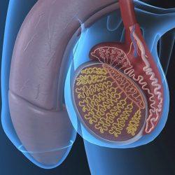 prosztatagyulladás és elhúzódó erekció)