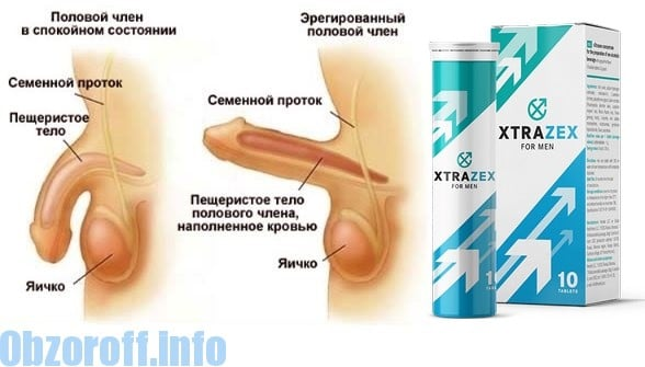 az erekció anatómiája
