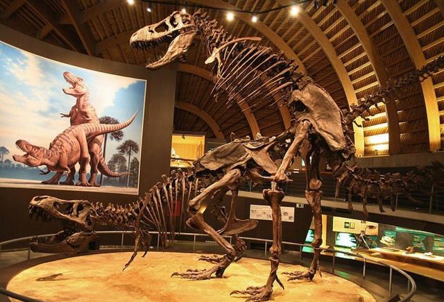 dinoszaurusz pénisz)