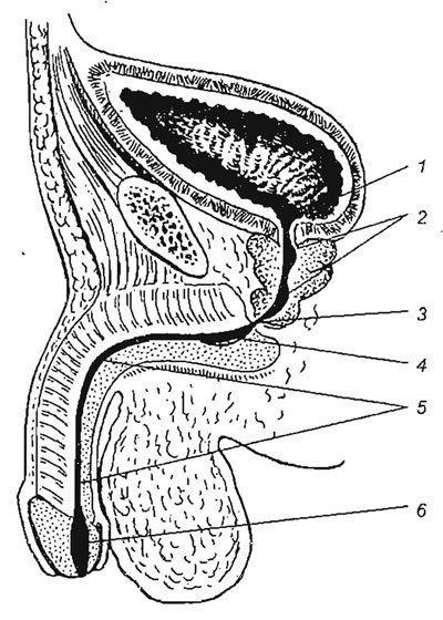 női klitorisz felállítása