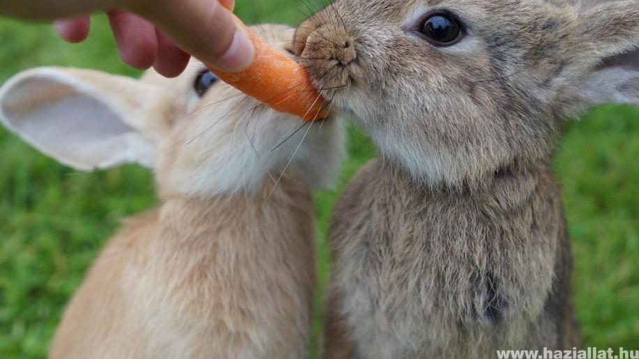 mit ehet a jó merevedésért)