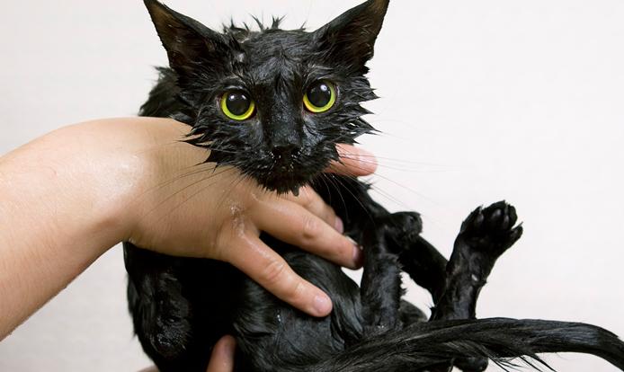 Hogyan etessük a macskát ivartalanítás után?