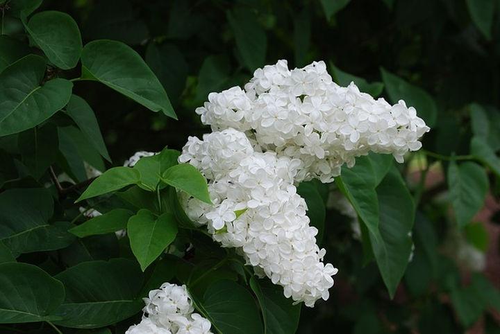 fehér virágzás az erekció során