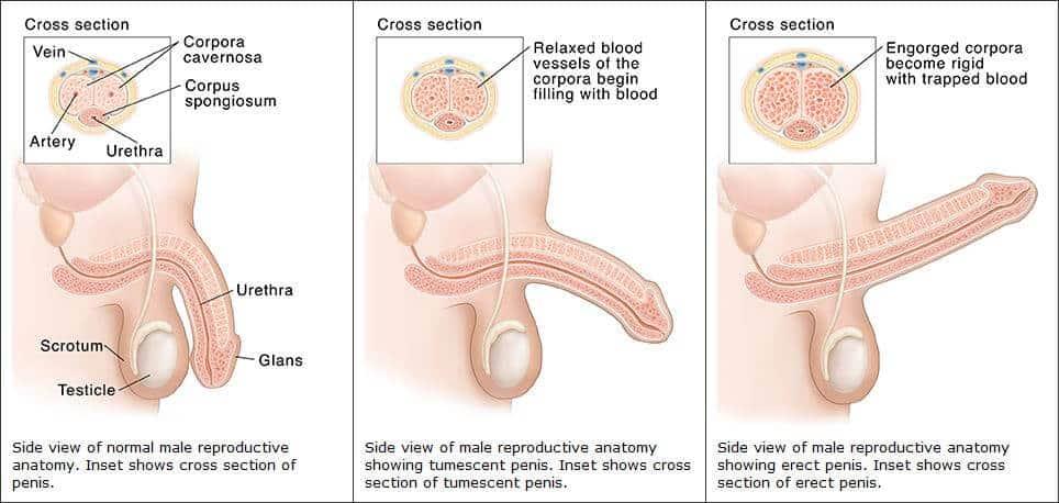 amikor az erekciós sperma áramlik