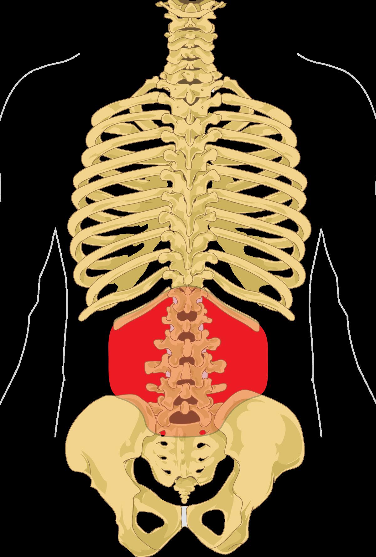 a hát alsó része és a merevedés erekciós kenőcs stimulálása