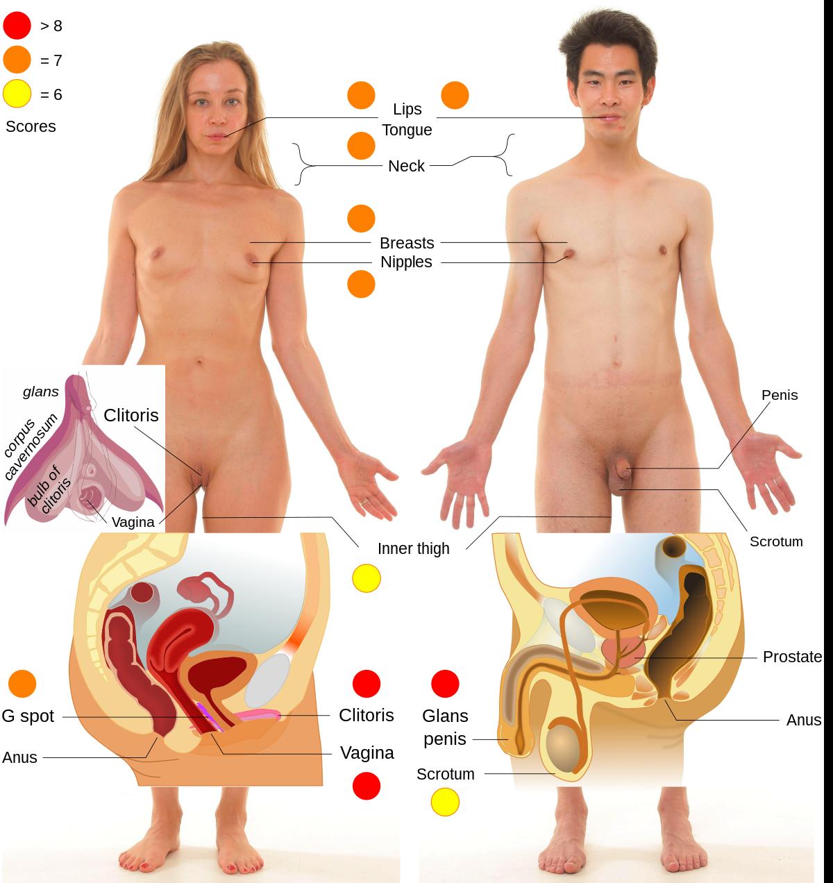 pénisz és erogén ha nincs pénisze