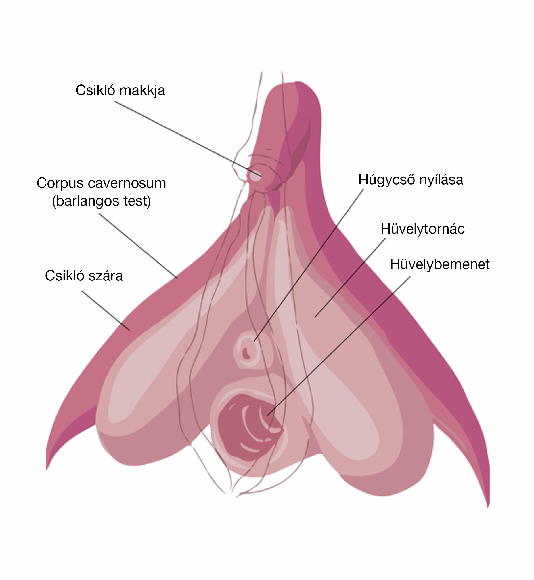 Szűkszavúan a vaginizmusról