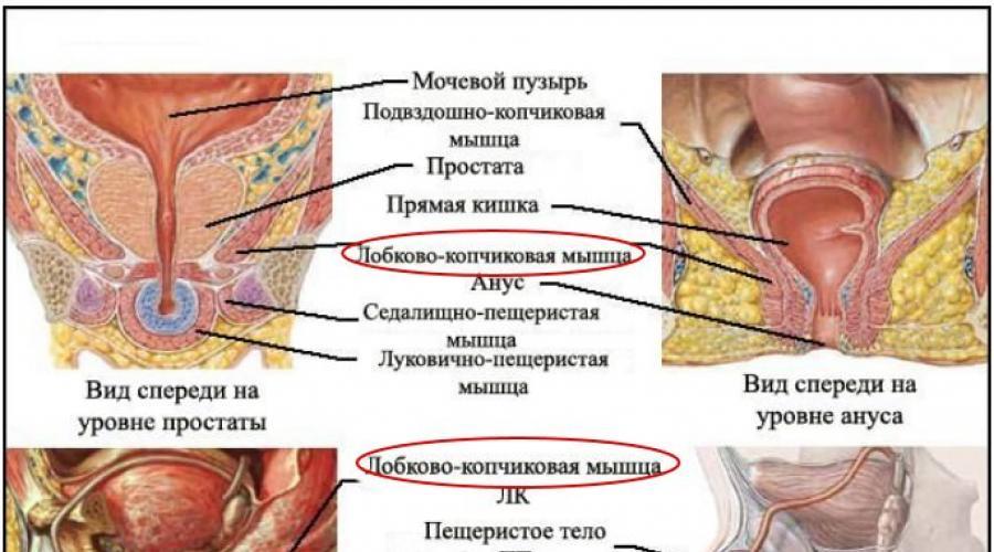 gyakorlatok az erekció videó javítására)