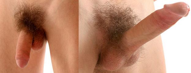 férfi nemi szerv erekció nélkül